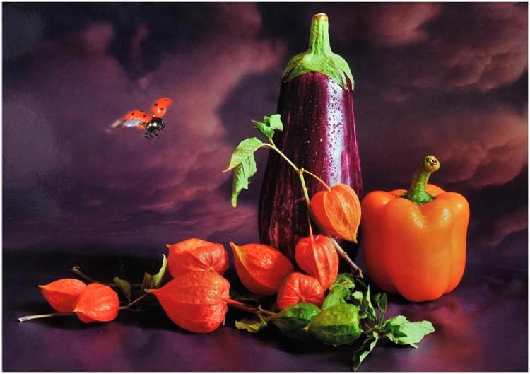 2ème prix libre couleurs / Still Life / H. Martin