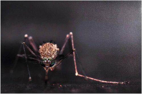 1er prix Libre couleurs / Regard de moustique / P. Barbier
