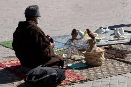 Homme aux oiseaux
