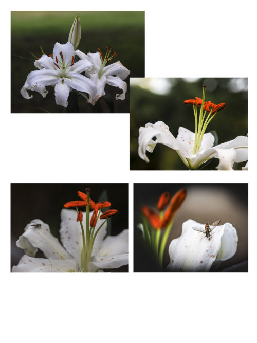 """Marie Frost """"Fleur de Lys"""""""