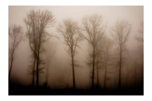 "Hervé Hellec ""Arbres dans la brume"""