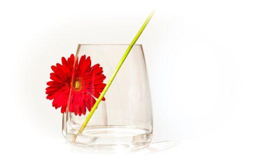 """Marie Frost """"La fleur dans le verre"""""""