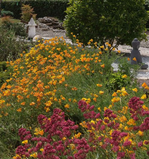"Isabelle Thibault ""Confinement floral"""